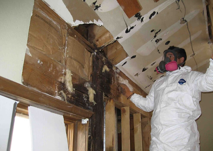 MJ Home Services LLC | Baltimore Water Damage and Mold removal Pros
